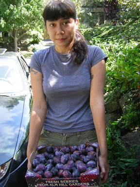 Volunteer holding a box of plums