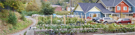 Seattle Community Farm Panorama