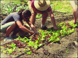 Solid Ground now operates farms in the South Park neighborhood and at the Rainier Vista housing community.