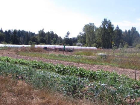 A farmer pulls his wheelbarrow across Seattle Tilth Farm Works